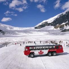 Columbia icefields tour