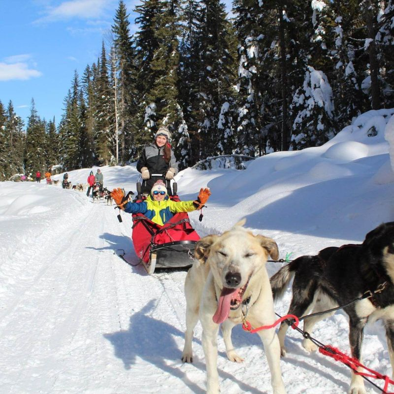 Hop on a dogsled with Cold Fire Creek Dogsledding