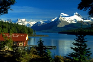 Maligne valley wildlife discovery tour