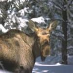 winter wildlife discovery tour